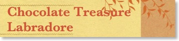 chocolate-treasure-labradore