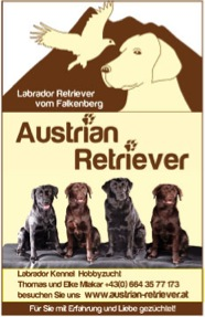 Austrian Retriever